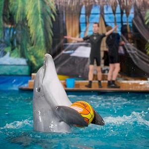 Дельфинарии, океанариумы Немчиновки