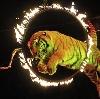 Цирки в Немчиновке